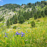 mountains, meadows and blue sky Royalty Free Stock Images