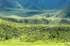 Mountains meadows forest Royalty Free Stock Photos