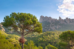 Mountains Montserrat and forest, Spain Royalty Free Stock Photos