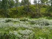 Green nature in the mountains of north Dalarna, Sweden royalty free stock image