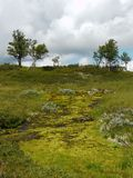 Green nature in the mountains of north Dalarna, Sweden royalty free stock photography