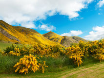 Mountains of New Zealand Stock Image