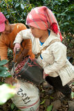 In the mountains of northern, Thailand Woman of the Akha ethnic Stock Photography