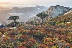 Mountains oа Socotra island and dragon trees Royalty Free Stock Photos