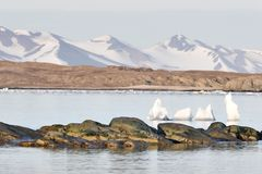 Mountains over the Arctic fjord - Spitsbergen, Svalbard Stock Images