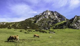 Mountains Picos de Europa, Asturien, Spanien stockfotografie
