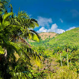 Mountains  in Pinar del Rio , Cuba. Mountains  in the province of Pinar del Rio in Cuba, famous for its landscapes and for being a worlwide known tobacco growing Stock Photography