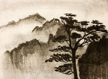 Mountains and pine. Mountain pine trees and thick fog Royalty Free Stock Image