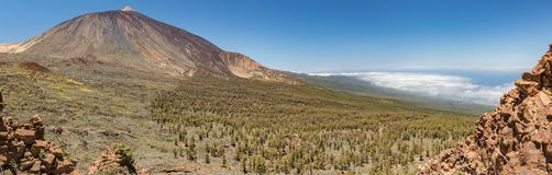 Mountains and pine tree forest near volcano Teide, partly covered by the clouds. Bright blue sky. Teide National Park, Tenerife, royalty free stock photos