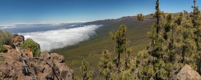 Mountains and pine tree forest near volcano Teide, partly covered by the clouds. Bright blue sky. Teide National Park, Tenerife, stock photo