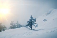 Mountains and pine Stock Photos