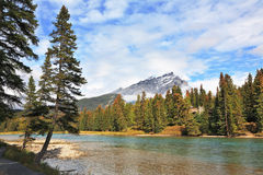 Mountains and pines at the mountain river Banff Royalty Free Stock Photos