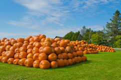Mountains of Pumpkins Royalty Free Stock Image