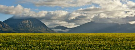 Mountains and rape fields Stock Image