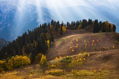 The forest in the mountains, patches of light, the autumn landscape. Mountains, the rays of the sun illuminate the forest in the mountains, patches of light, the stock images