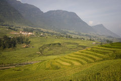 Mountains and rice fields in sapa in vietnam Royalty Free Stock Photography