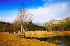 Mountains river  in autumn.  Muga Stock Photos