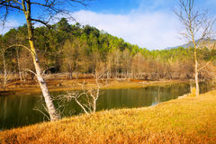 Mountains river with forest riverside in autumn day.  Muga Stock Photos