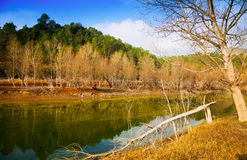 Mountains river with forest riverside in autumn. Day.  Muga,  Spain Royalty Free Stock Images