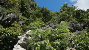 Mountains and rocks with jungle. Mountain landscape on a tropical island.tree growing on a rock.Beautiful landscape of tropical island Busuanga (Philippines) stock footage