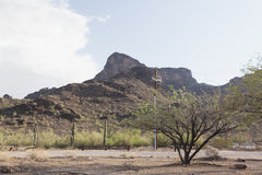 Mountains and Saguaro Cacti plants in the Arizona desert Royalty Free Stock Images