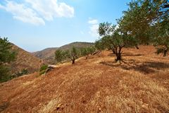 Mountains of Samaria Stock Images