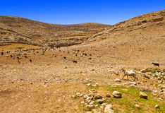 Mountains of Samaria Royalty Free Stock Images