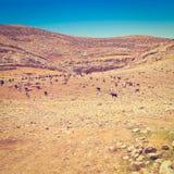 Mountains of Samaria Royalty Free Stock Photos