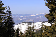 Mountains seen between pine trees in winter. Sunny day royalty free stock photo
