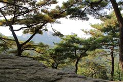 Mountains of Seoul. Pines in the mountains of Seoul. Bukhansan National Park Stock Photos