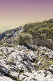 Rocksand trees of Ronda in vertical Stock Photo