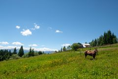 Mountains sky and horse royalty free stock photos
