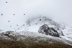 Mountains Snow Birds White Black Grey Fog Stock Image