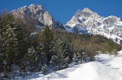 Mountains with snow, forest in the middle. Alpine environment with high peaks and snow. Pictures taken near Vrata, Mojstrana, Slovenija Royalty Free Stock Photos