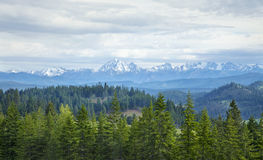 Mountains with snow and pines in Washington state Stock Photo