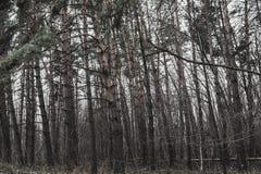 Walk around the Southern Bug River, Ukraine stock photos