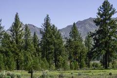 San Bernardino Mountains in Southern California stock images