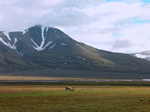 Mountains of Spitsbergen Royalty Free Stock Images