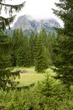 Mountains and spruces near Black Lake in Montenegro Royalty Free Stock Images