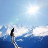 Mountains starling bird Royalty Free Stock Image