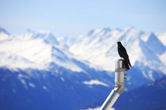 Mountains starling bird Royalty Free Stock Photography