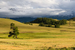 Altai: mountains steppe tree Stock Image