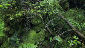 Mountains` stones, mosses, trees and ferns. stock video footage