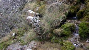 Mountains stream through moss rocks stock video