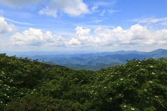 Mountains with Summer Blooms. View of the North Carolina mountains from Craggy Gardens overlook in the summertime royalty free stock photography