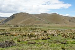 Mountains surrounded by thick grass in the Antisana Ecological Reserve, Ecuador Royalty Free Stock Photo
