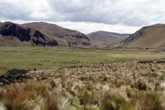 Mountains surrounded by thick grass in the Antisana Ecological Reserve, Ecuador Stock Photography