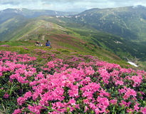 Mountains and sweethearts. Beautiful mountainous glade overgrown a native-flowers with view of the Chornogora ridghe (Carpathian Mt's, Ukraine) and couple Royalty Free Stock Photo