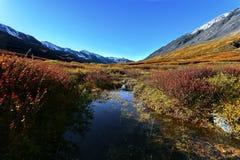 Mountains taiga lake Stock Image