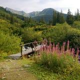 mountains tatra στοκ φωτογραφία με δικαίωμα ελεύθερης χρήσης